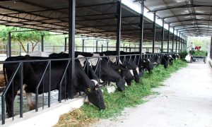 How Dairy Farm Loan Helps to Achieve The Planned Business Growth